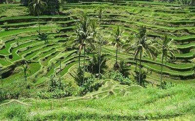 Voyages en Indonésie (18 jours / 17 nuits)