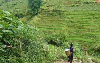 Trek dans les rizières de Sapa (4 jours / 3 nuits)